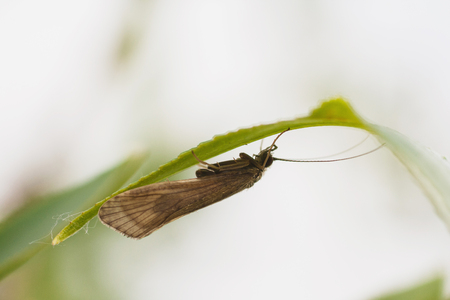 The butterfly sits on a green twig on a light background. Macro Photo
