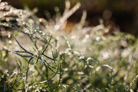 따뜻한 햇빛. 풀밭에 듀. 매크로 사진입니다. 물방울