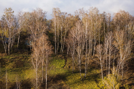 The light from the setting sun falls on the trees with yellow foliage. Autumn landscape Reklamní fotografie