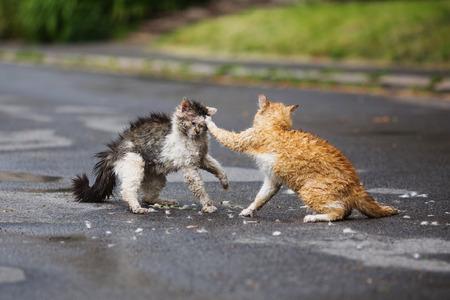 Street cats are fighting on the street. Orange and white gray wet cats are fighting on the road. Aggressive animals