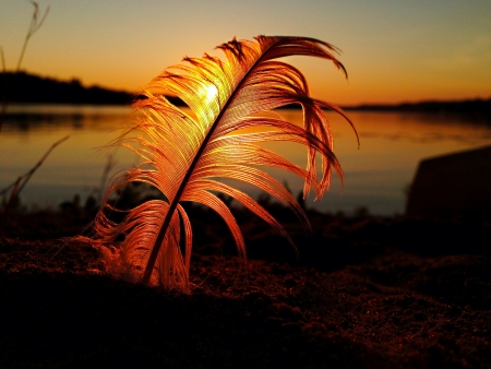 Soft and smooth swan feather turns golden in front of a sunrise on a lake. Stock Photo