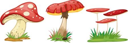 cartoon mushroom: illustration of mushroom on a white background