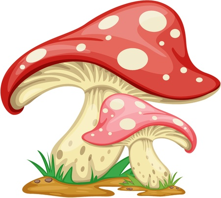 edible mushroom: Illustration of Mushroom on a white background