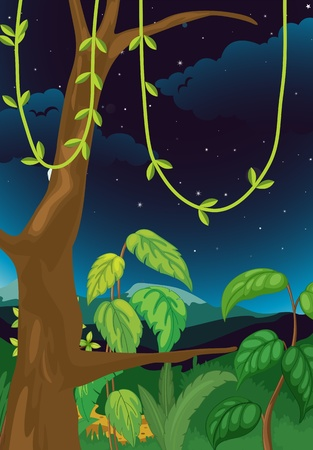 forest cartoon: Illustration of a nature background at night