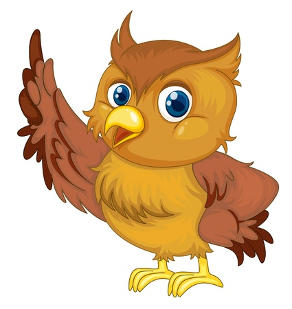 owl cartoon: Illustration of an isolated owl