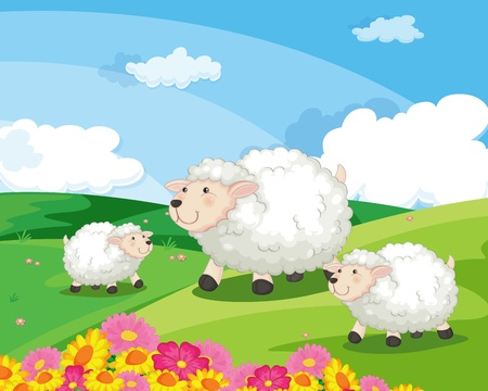 hijos: Ilustración de ovejas en el campo Vectores