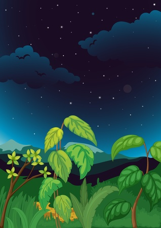 noone: Illustration of night time plant background Illustration