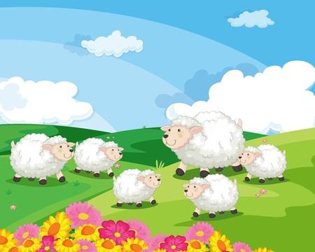 oveja: ovejas en un campo en Nueva Zelanda Vectores