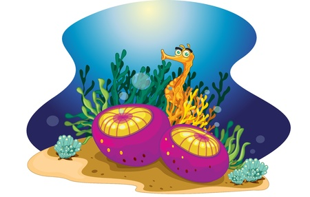 sea anemone: illustration of a colorful reef element