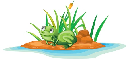 illustration of frog on island illustration