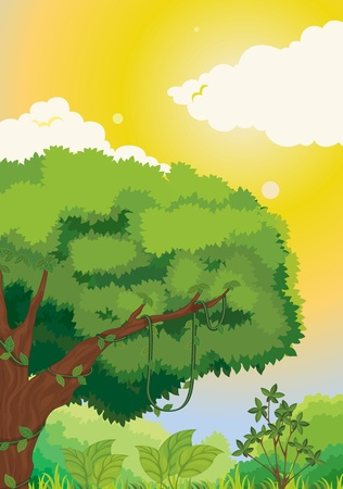 rainforest tree: Forest illustration  on a white background Illustration