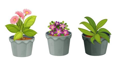 plants illustration on white background