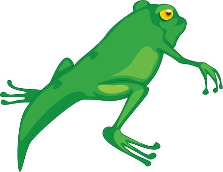 tadpole: Illustration of  a cartoon frog on white
