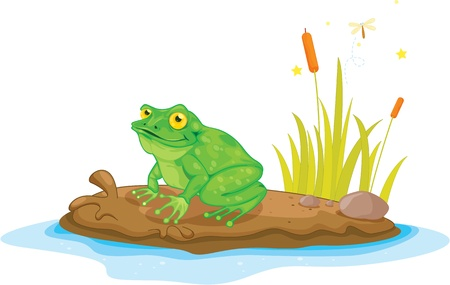 river rocks: Illustration of  a cartoon frog on white