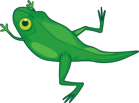 Illustration of  a cartoon frog on white Stock Vector - 13131474