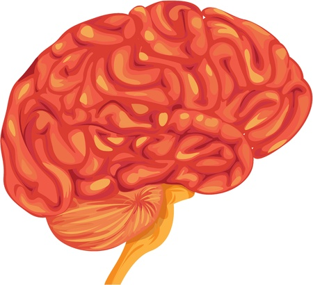 one people: illustration of brain on white Illustration