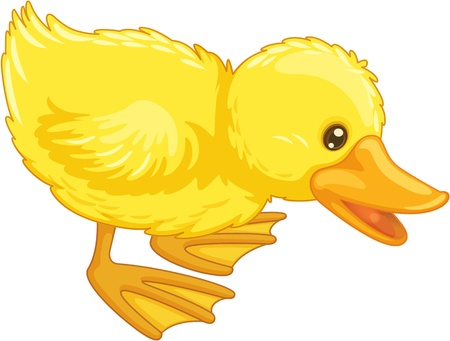 Illustration of an isolated duck Vector