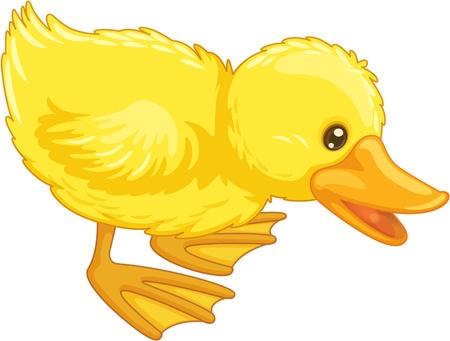 agachado: Ilustración de un pato aislado Vectores