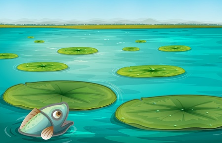 pond water: Illustration of lily pads on water Illustration