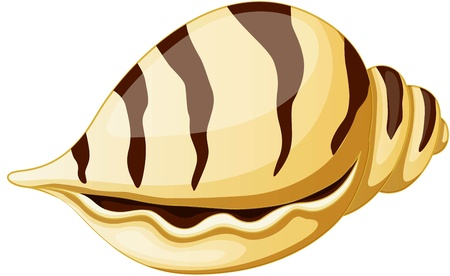 almeja: ilustraci�n de concha de mar sobre fondo blanco Vectores