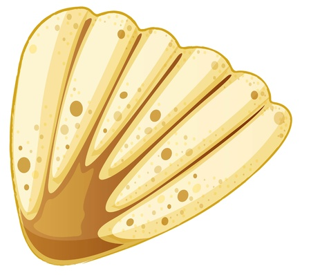 illustration of sea shell on white Vector