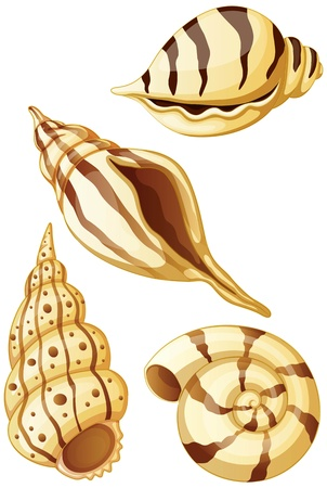 gastropod: illustration of various objects on white