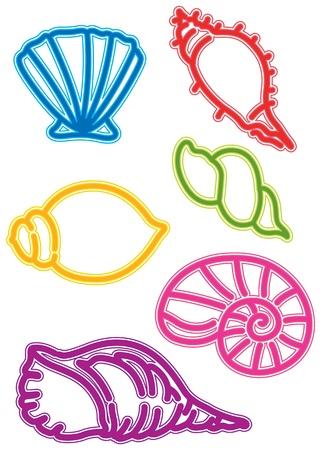 caracolas de mar: ilustración de varias conchas de mar sobre fondo blanco