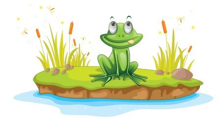 rana caricatura: Ilustración de una rana de dibujos animados en blanco
