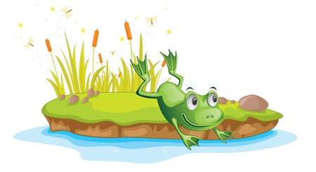 pond water: Illustration of  a cartoon frog on white