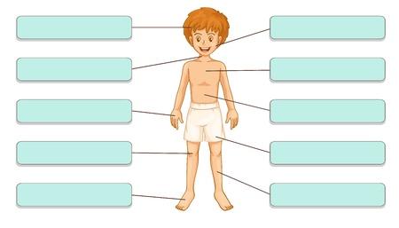 white underwear: Illustrazione di etichette di parti del corpo