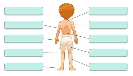 slip homme: Illustration des étiquettes des parties du corps (dos)