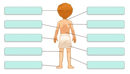 boy underwear: Illustration of body parts labels (back)