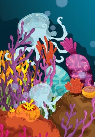 sea grass: illustration of sea plant on white