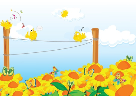 sunflower field: Four birds chirping happily