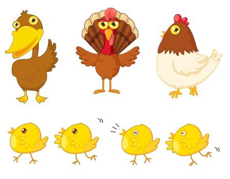 illustration of birds on white Stock Vector - 13190134
