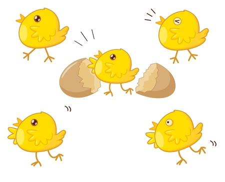 eggshells: Ilustraci�n del huevo y la cr�a checken