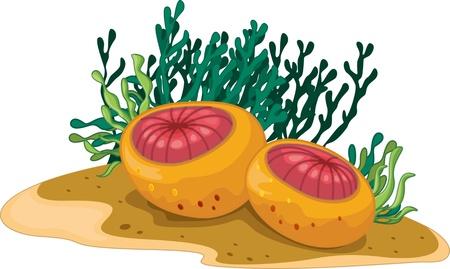 algas marinas: Dos plantas acu�ticas y algas esf�ricas