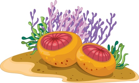 Still life of assorted ocean plants Vector