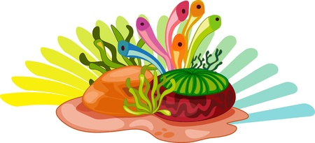 algae cartoon: Colourful aquatic plants on white background Illustration