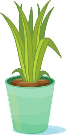 Tall green leaves inside a green flower pot Vector
