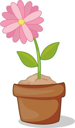 Pink flower in full bloom inside pot Stock Vector - 13206229