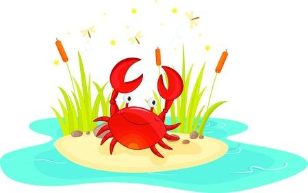amphibian: illustration of crab sitting near pond