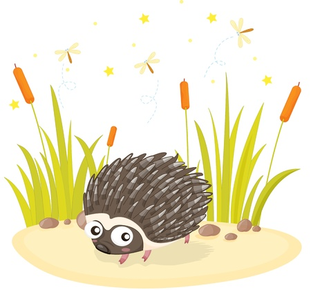 illustration of hedgehog standing on rock Vector