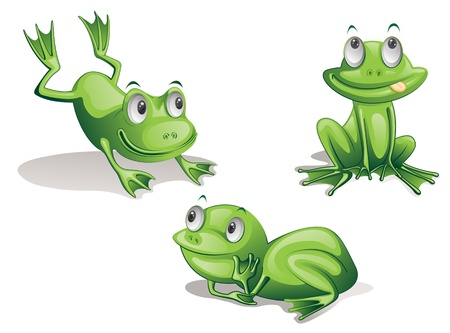 illustration of three frogs on white illustration