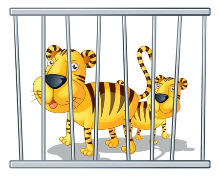 illustration of two tigers in a cage illustration