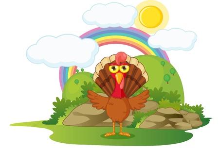illustration of turkey bird on white illustration