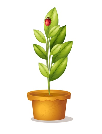 arboles frondosos: Aislado olla pland y mariquita Vectores
