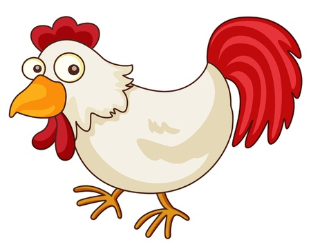 domesticated: Illustration of a chicken cartoon