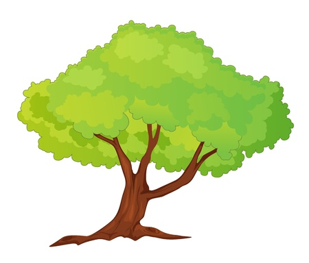 leafy trees: Ilustraci�n de un solo �rbol aislado - estilo de dibujos animados Vectores