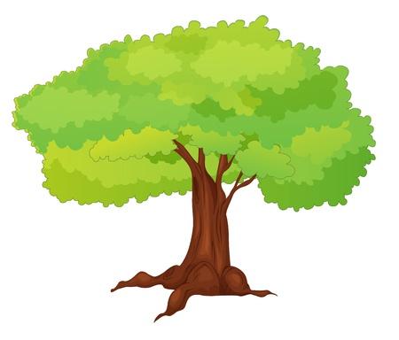Illustration of single isolated tree - cartoon style